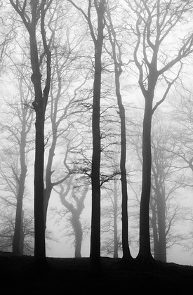 Foggy-Trees-Blackdown