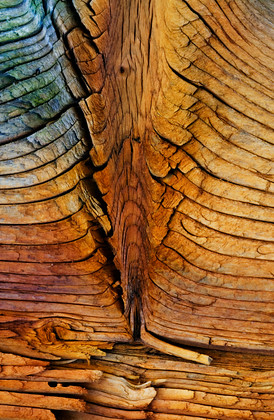 Abstract-Wood005