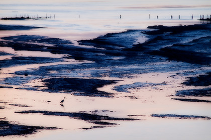 Heron-And-Low-Tide