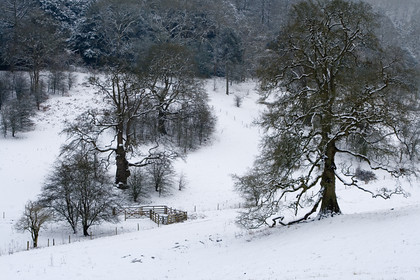 Woodchester-Snow-no1